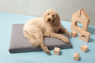 Laylo Core Gray Pet Bed