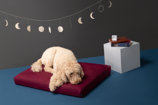 Laylo Core Maroon Pet Bed