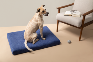 Laylo Core Blue Pet Bed