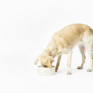 Fable Pets Bowl