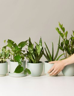 The Sill Potted Plant Subscription