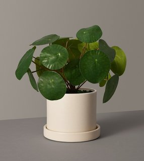 The Sill Faux Pilea Peperomioides