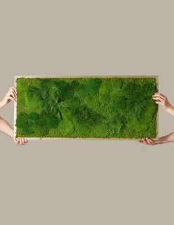 "The Sill Preserved Large Living Wall, 40"" x 18"""