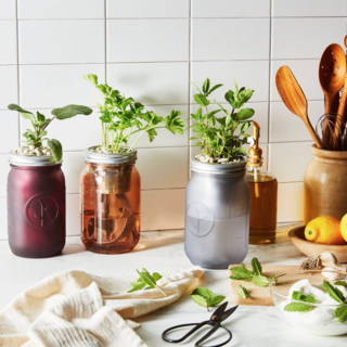 Modern Sprout Garden Jar Herb Kit