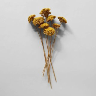Bloomist Dried Natural Yarrow