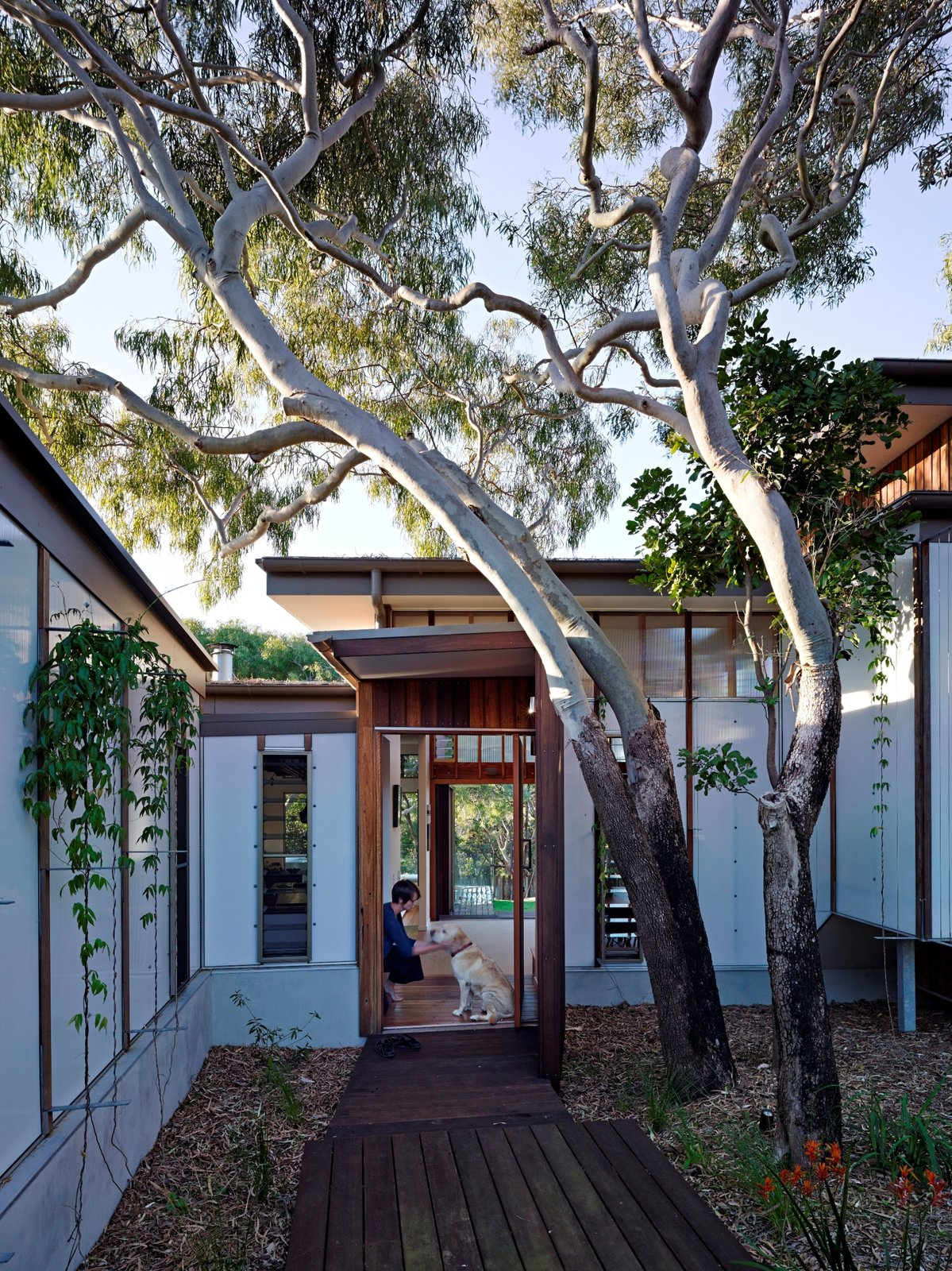 Outdoor, Front Yard, Trees, Flowers, Walkways, Gardens, and Hardscapes  Photo 2 of 10 in Vegetation Cocoons This Tranquil Beach House in Australia