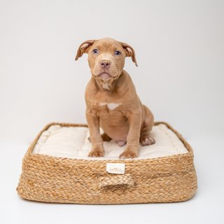 YaYa & Co. Tucker All Natural Pet Bed
