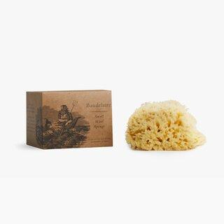 Baudelaire Natural Sea Sponge