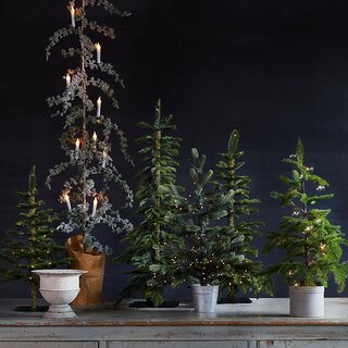 Terrain Faux Pre-Lit LED Alpine Tabletop Tree