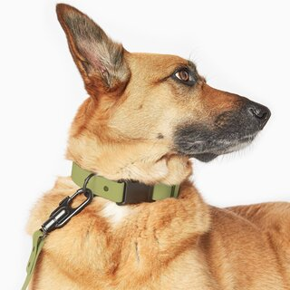 Fable Pets Signature Collar