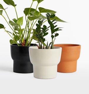 Rejuvenation Brice Medium Planter