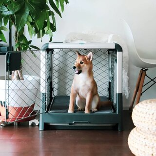 Diggs Grey Revol Dog Crate