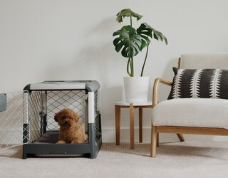 Diggs's Dog Crate Gives Your Furry Friends a Home as Well-Designed as Your Own
