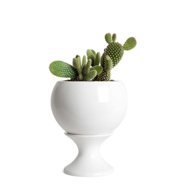 Photo 1 of 1 in Stoneware Planters