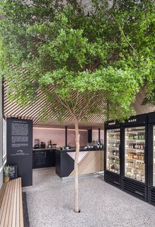 In the basement of this tiny Dutch juice shop, the tree rests in a bucket of fertile soil and is connected to irrigation.