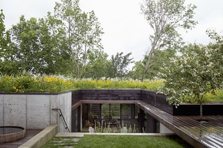 Stained cedar, ipe, and concrete form the 2,500-square-foot home's modern palette. Indigenous wildflowers and native grasses grow on top of the structure; this planted roof also helps insulate the home and limit its energy needs.