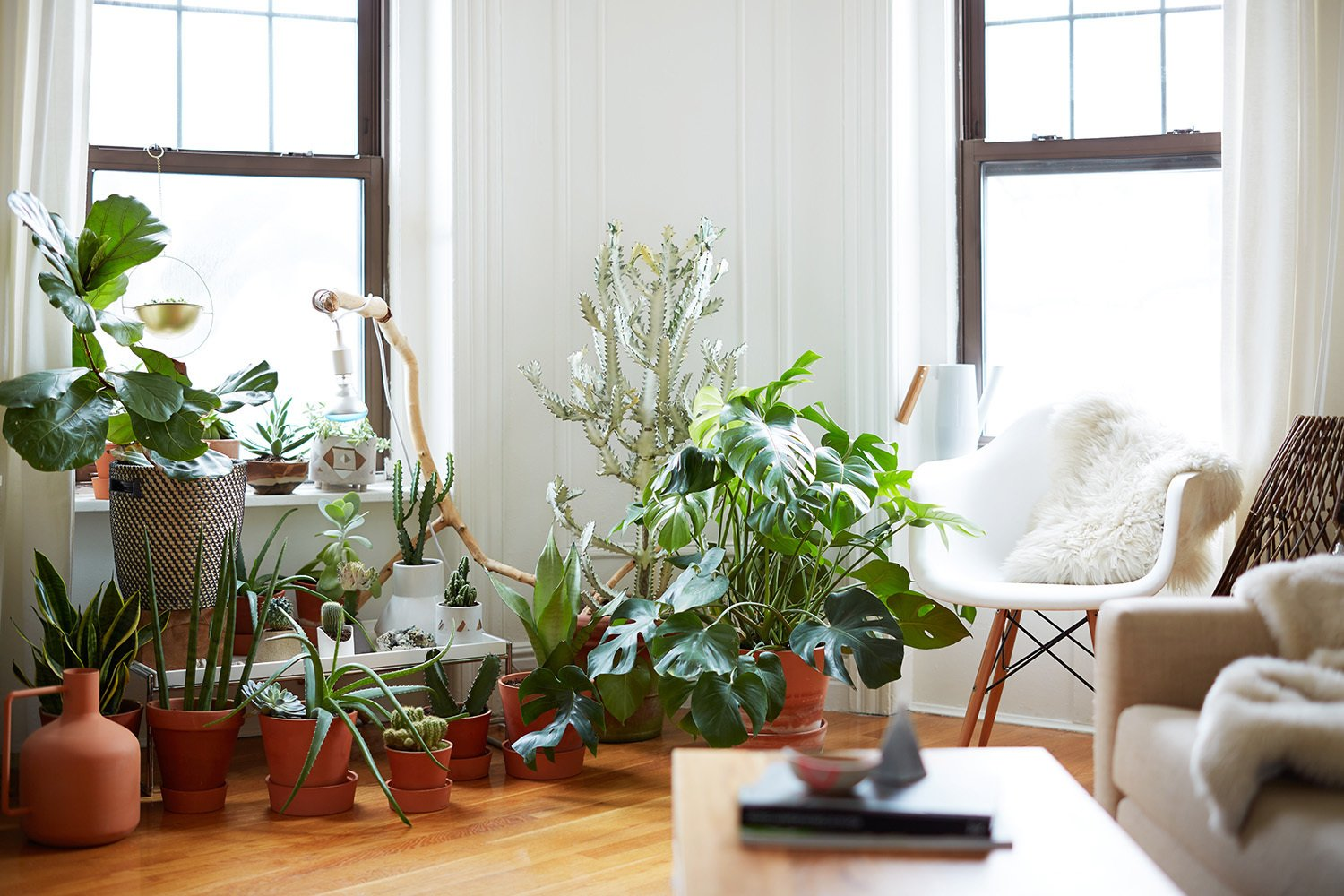 500 Square Feet Is Just Right in Greenpoint