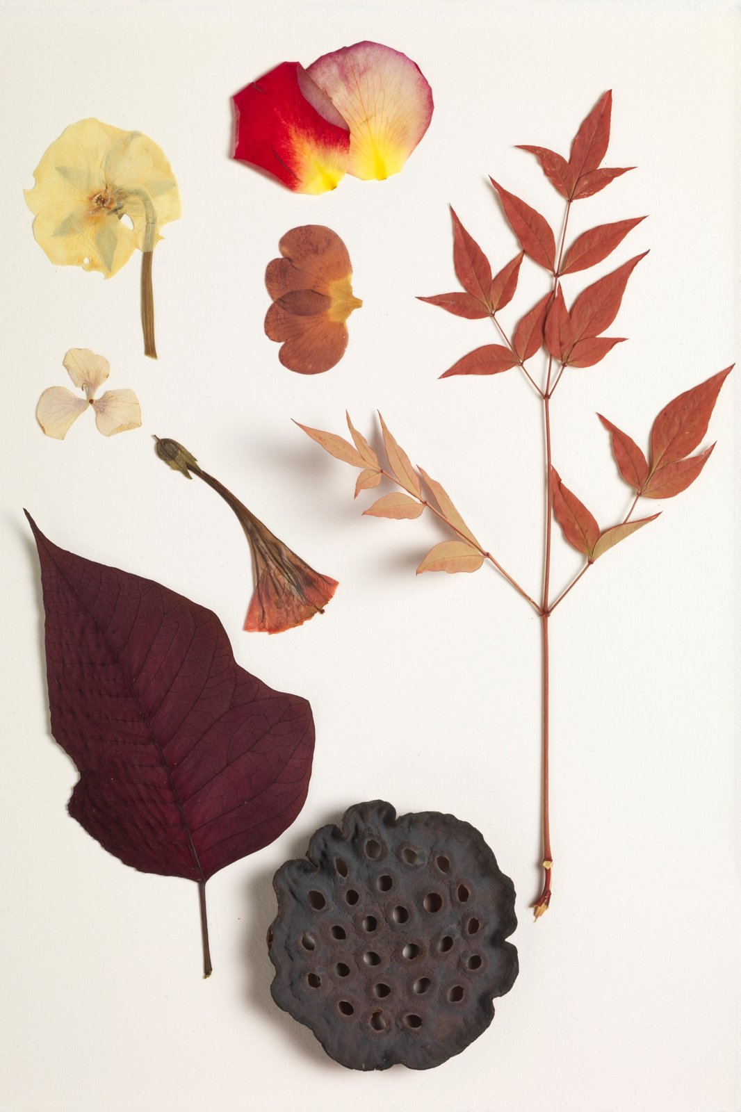 Inspired by an herbarium, the experiments behind the Nichetto Colour System have helped them incorporate the nature-inspired findings into the choices they make in terms of production materials.  Photo 6 of 8 in Bringing Back a Forgotten Material