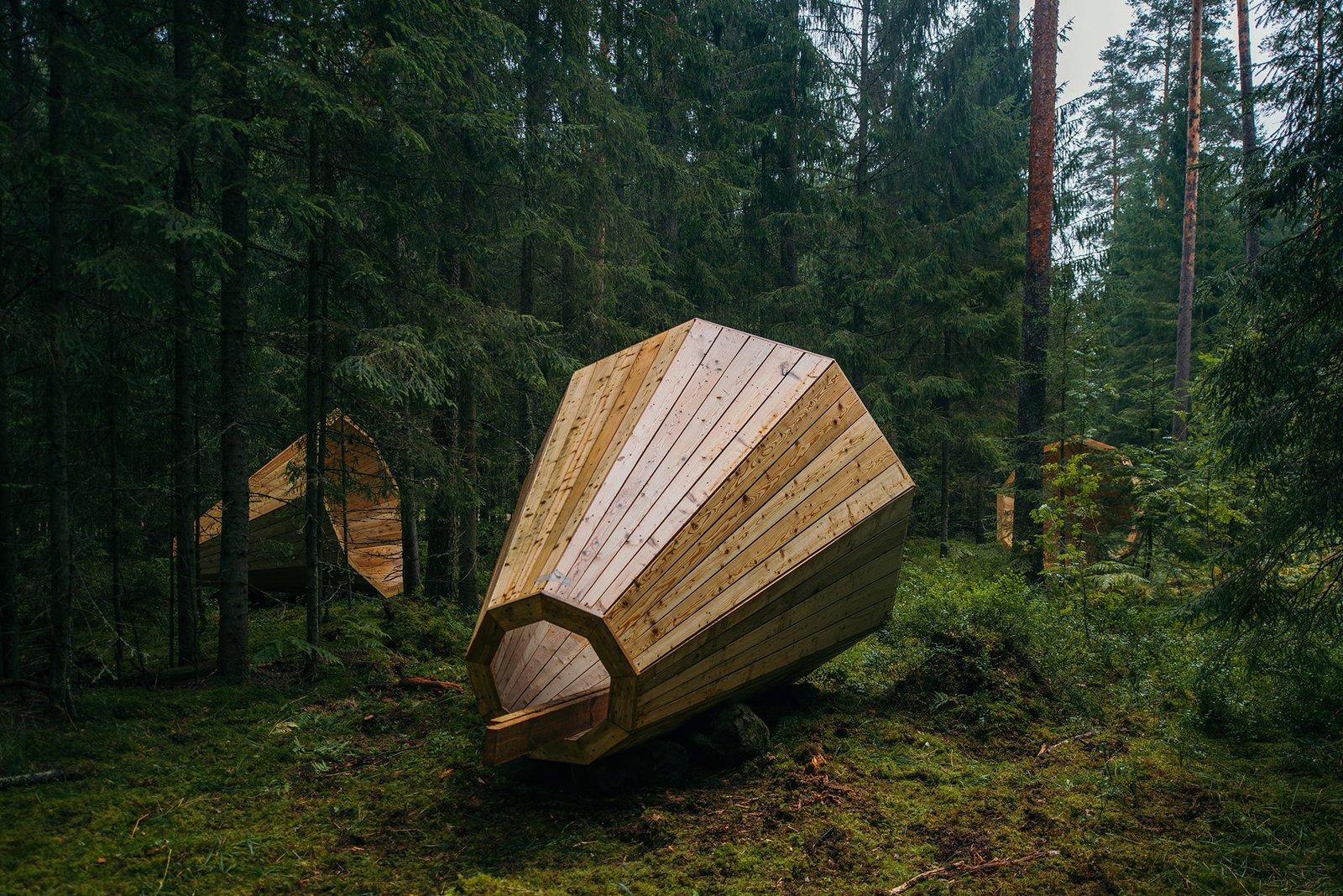 Estonian Forest Sounds - Dwell