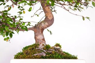 Plant Your Mac! By Monsieur Plant - Photo 7 of 7 -