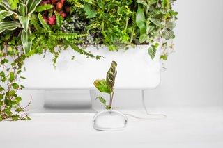 Plant Your Mac! By Monsieur Plant