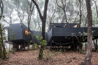Forest House By Envelope A + D - Photo 7 of 7 -