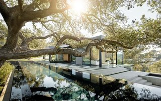 Because the architects wanted to showcase the view of one of the more majestic oaks on the property, they placed a lap pool below the tree so the mirror-like surface of the water would gracefully reflect its image.
