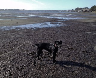 Curly in her cove (at low tide, her favorite!)