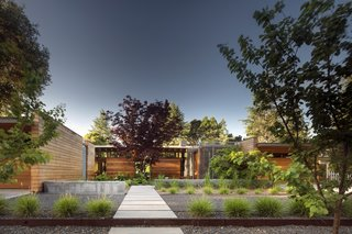 """A mature Japanese maple was preserved during construction. """"The way we designed the entry sequence, with the front door not facing the street, but rather facing the Japanese maple tree, relates to Christopher Alexander's concept of 'entrance transition,'"""" says Mottola."""