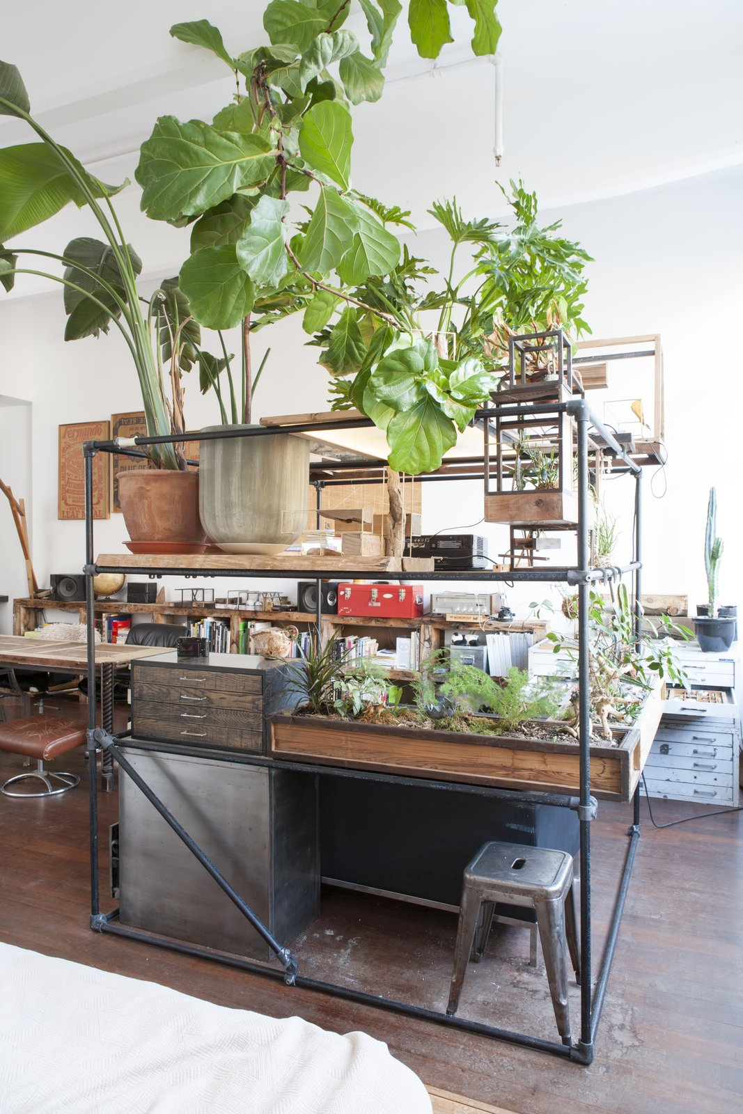 Terrariums from Bui's own company Plant-In City occupy the corner between the dining and sleeping areas of the studio.  Photo 4 of 5 in Huy Bui's Brooklyn Loft Is Like a Self-Contained Jungle