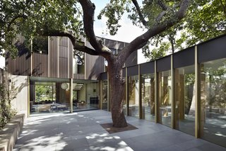 This Modern Courtyard Home Celebrates a 100-Year-Old Tree