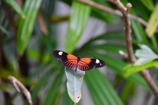 Hot Tropic Part 3 - Photo 6 of 7 - Into the butterfly room.
