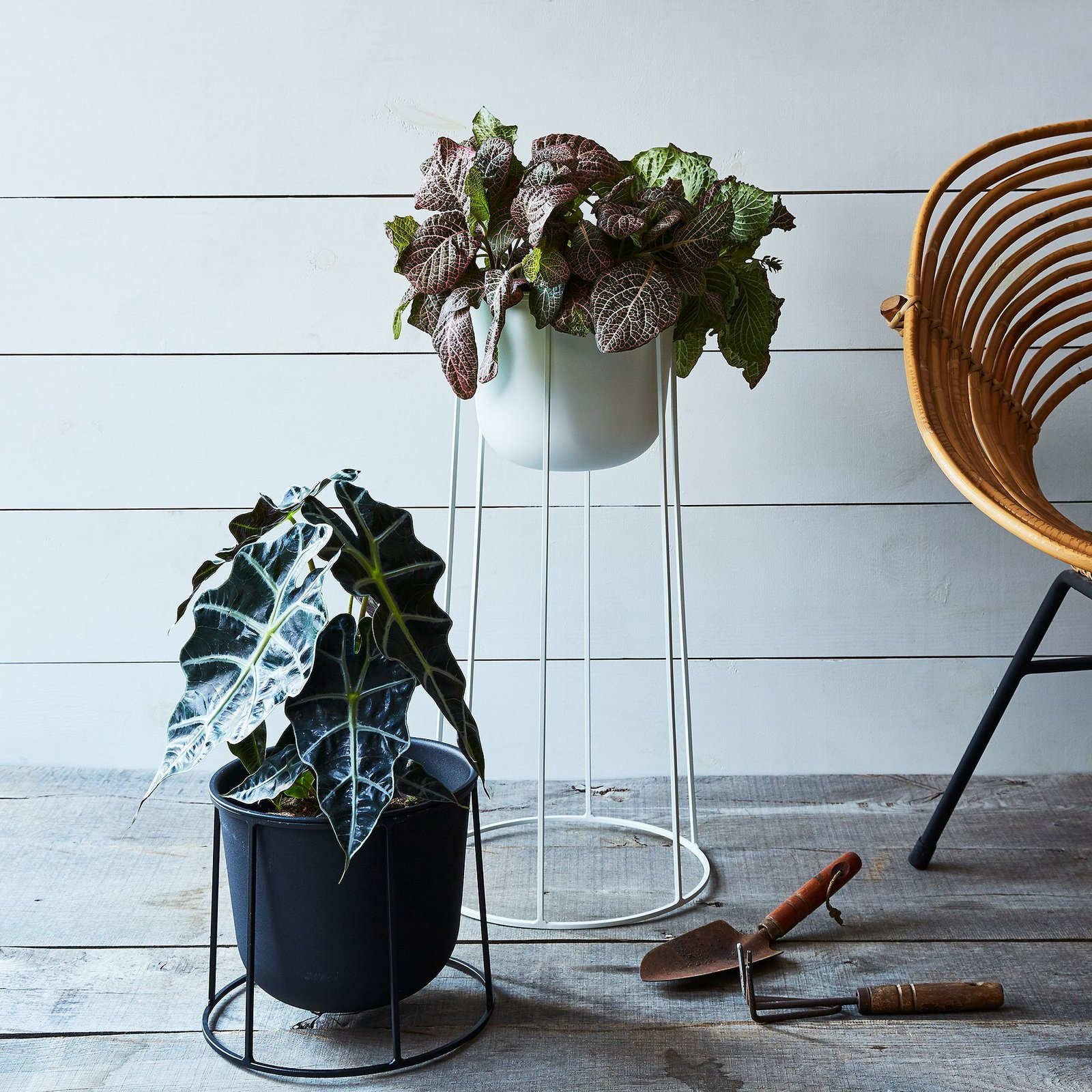 Menu Wire Plant Stands by Food52 - Dwell