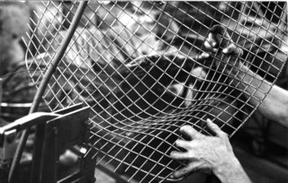 Excess wire being removed after the rods have been joined. Image Knoll Archive.