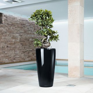 Rondo 40 Self Watering Planter by Lechuza