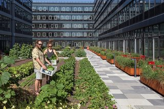 """Residents will be able to harvest their own crops under the direction of a """"farmer-in-residence."""""""