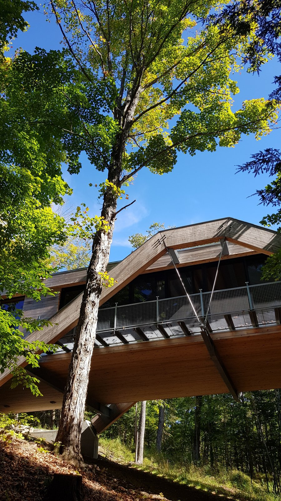 Outdoor, Walkways, Trees, Metal Patio, Porch, Deck, Woodland, and Slope  Photo 10 of 12 in A Unique Home in the Canadian Forest That Doubles As a Bridge
