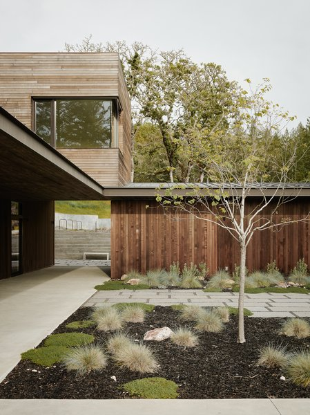 The home is clad in Alaskan yellow cedar—a durable, low-maintenance wood that weathers over time to turn a light gray—in order to blend in with the gray bark of the oaks. The vertical siding on the one-story volume takes on the visual rhythm of the surrounding trees and grasses.