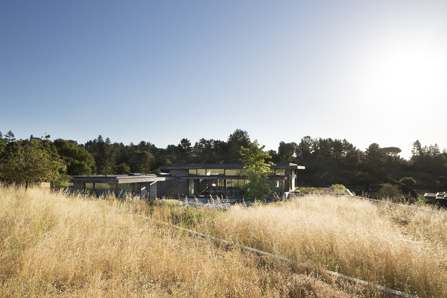 Outdoor, Shrubs, Trees, Grass, and Back Yard  The Meadow Home by Feldman Architecture