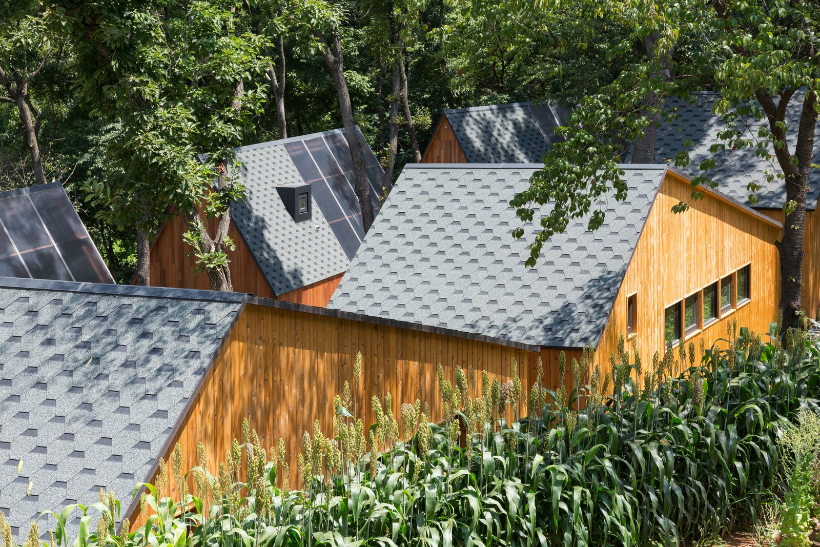 Exterior, Cabin Building Type, Gable RoofLine, House Building Type, Shingles Roof Material, and Wood Siding Material  Photo 1 of 11 in A Camping Village in South Korea Draws Inspiration From an Iconic Fairy Tale