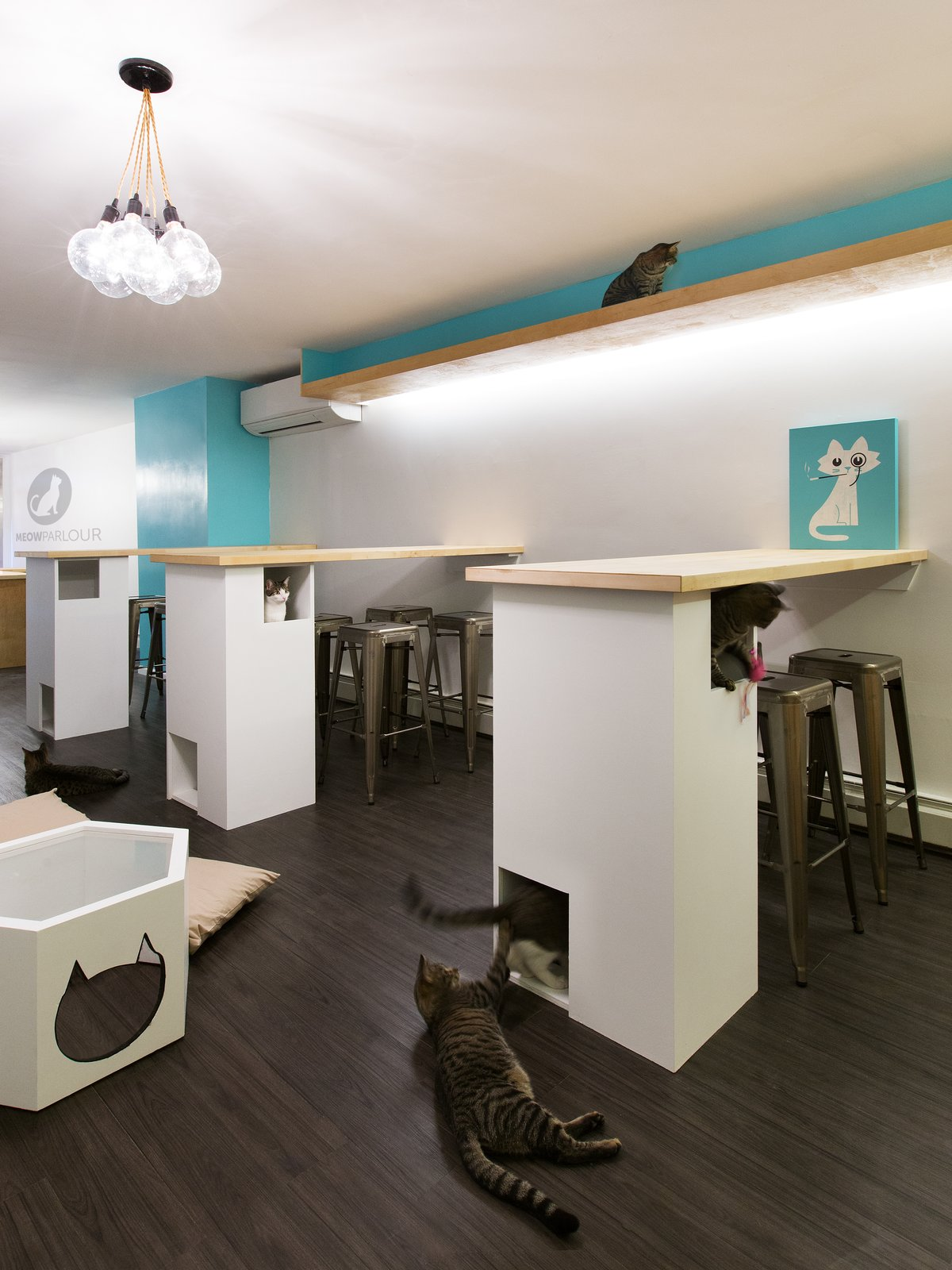 Upper catwalk allows for a quiet place for the cats to getaway.  The bar counters are supported by a cat maze structure  Photo 7 of 21 in 21 Cats Living in the Modern World from Meow Parlour
