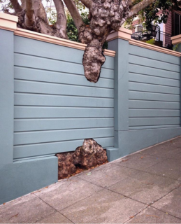 Far Out Flora captures this thoughtful fence design she discovered in San Francisco's Marina District.