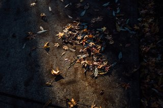 The Opinionated Leica Q - Photo 9 of 9 - A narrow beam of light hits some dead leaves on the pavement.