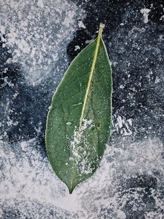 The outline and detail of a lone leaf are sharpened by the icy street.