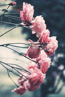 Inspiring flowers for your next interior