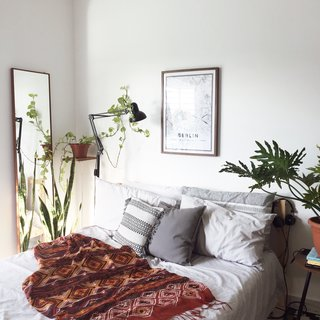 11 Houseplants That Flourish in Low Light
