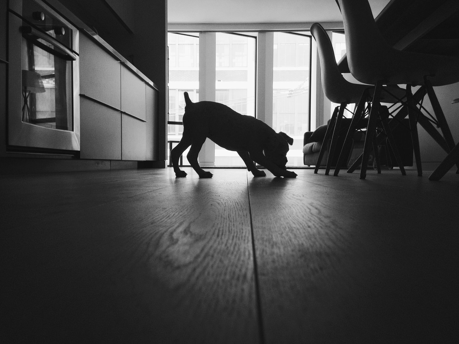 Dogs on Dwell:  My Modern Boxer Tofu
