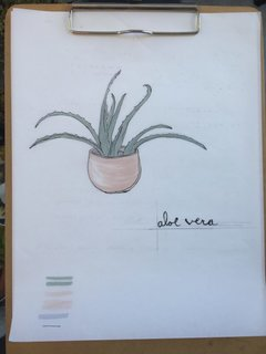 Put A Plant On It | Aloe Edition - Photo 1 of 5 -