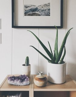Put A Plant On It | Aloe Edition - Photo 4 of 5 -