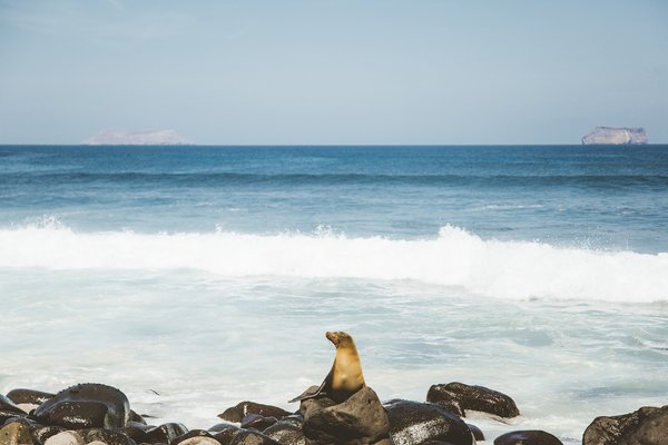 Photo 7 of 9 in Pikaia: A Galapagos Eco-Lodge